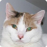 Adopt A Pet :: Doire - Kalamazoo, MI