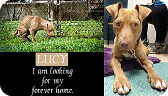 Pit Bull Terrier Mix Dog for adoption in Houston, Texas - Lucy