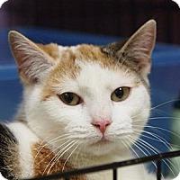 Adopt A Pet :: Isabelle - Ocean City, NJ