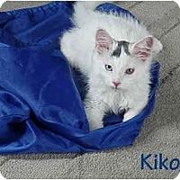 Adopt A Pet :: Kiko - New York, NY