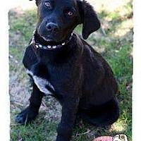 Adopt A Pet :: Meyer - Haverhill, MA