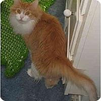 Adopt A Pet :: Max - DECLAWED - Cincinnati, OH