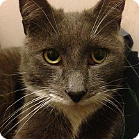 Adopt A Pet :: Lionel - Brooklyn, NY
