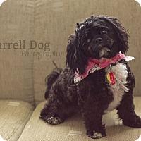 Adopt A Pet :: Eve - Toronto, ON