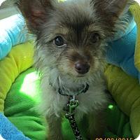 Adopt A Pet :: Gremlin - Jacksonville, FL
