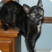Adopt A Pet :: MAGDA - Acme, PA