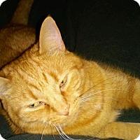 Adopt A Pet :: Crush - Bentonville, AR
