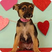 Adopt A Pet :: Lani - Waldorf, MD