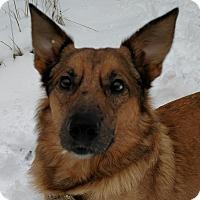 Adopt A Pet :: Moe - Ypsilanti, MI