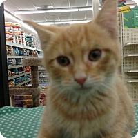 Adopt A Pet :: Tangy - Warren, OH