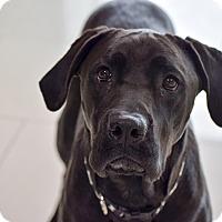 Adopt A Pet :: Sherlock - Meridian, ID