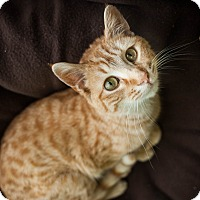 Adopt A Pet :: Jiggs - Red Wing, MN