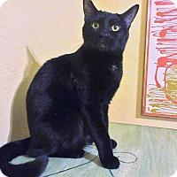Adopt A Pet :: Logan Sambuca - Phoenix, AZ