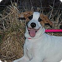 Adopt A Pet :: Taffy - Harrisburgh, PA
