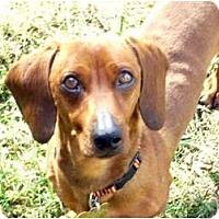 Adopt A Pet :: Clyde - San Jose, CA