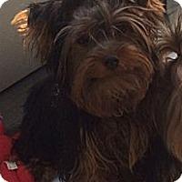 Adopt A Pet :: Marcus - New York, NY