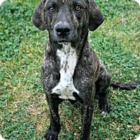 Adopt A Pet :: Jude - Lufkin, TX