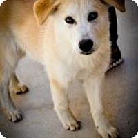 Adopt A Pet :: Pearl - Hancock, MI