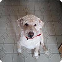Adopt A Pet :: Buddy - Ogden, UT