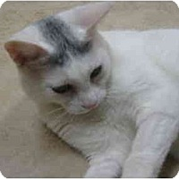 Adopt A Pet :: Cheyanne - Deerfield Beach, FL