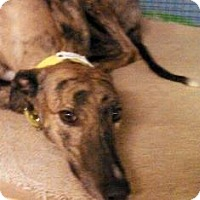 Adopt A Pet :: ThrowTheCurve - Knoxville, TN