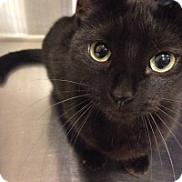 Adopt A Pet :: Nikita - Muncie, IN
