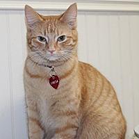 Adopt A Pet :: Freida - Danville, KY