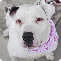 Adopt A Pet :: Fufu - Brooklyn, NY