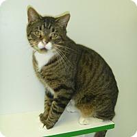Adopt A Pet :: Flynn Ryder - Hamburg, NY
