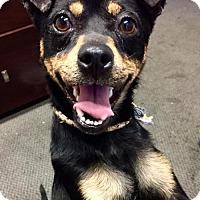 Adopt A Pet :: Hops - Huntington Beach, CA