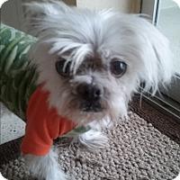 Adopt A Pet :: Ricky - Ocean Ridge, FL