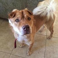 Adopt A Pet :: Romeo2 - Scottsdale, AZ