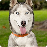 Adopt A Pet :: Mizuki - Marina del Rey, CA