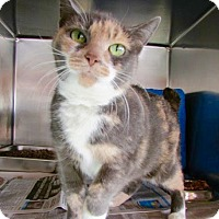 Adopt A Pet :: Kitty - Port Jervis, NY