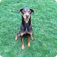 Adopt A Pet :: Cinnamon - Columbus, OH
