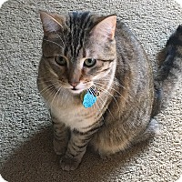 Adopt A Pet :: Jojo/Lady - Rochester, MN