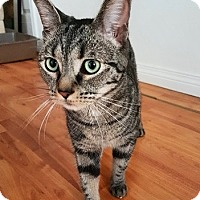 Adopt A Pet :: Jeje - Vancouver, BC