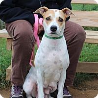 Adopt A Pet :: Sadie-Prison Graduate - Elyria, OH