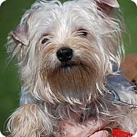 Adopt A Pet :: Winston - Providence, RI