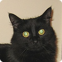 Adopt A Pet :: JASMINE-2013 - Hamilton, NJ