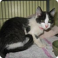 Adopt A Pet :: Colleen - Shelton, WA
