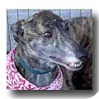 Adopt A Pet :: Losy - Roanoke, VA