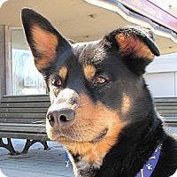 Adopt A Pet :: Duke - Rigaud, QC