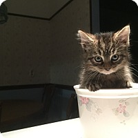 Adopt A Pet :: Jenny - Richfield, OH