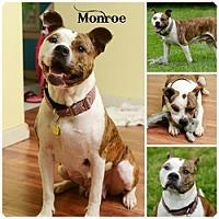 Adopt A Pet :: Monroe - Sioux Falls, SD