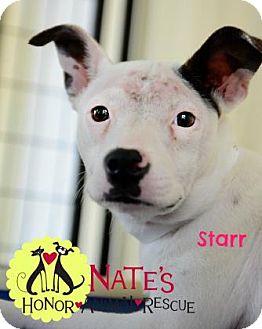 Shepherd (Unknown Type)/Terrier (Unknown Type, Medium) Mix Dog for adoption in Bradenton, Florida - Star