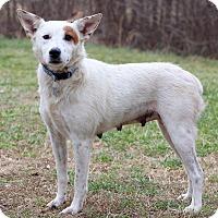 Adopt A Pet :: Zeva ADOPTION PENDING - Waldorf, MD