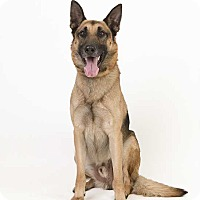 Adopt A Pet :: Major - Council Bluffs, IA