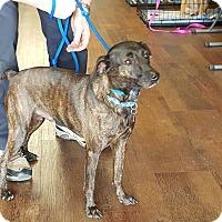 Adopt A Pet :: Skeeter - Byhalia, MS