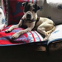 Adopt A Pet :: DARTH - Sonora, CA